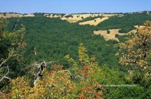 Parchi naturali e oasi WWF10